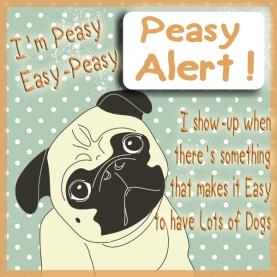 Pug dog
