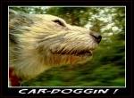 CAR DOGGIN