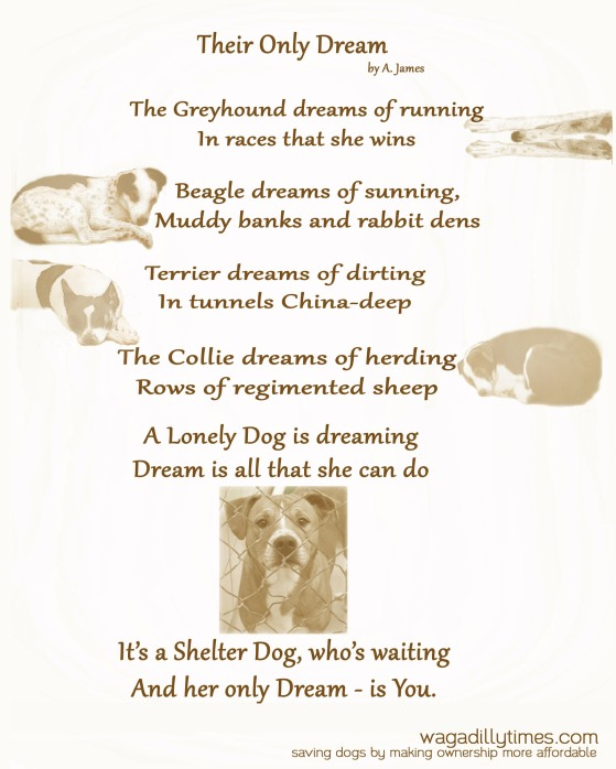 Inspired by my Rescued Shelter Dogs; Gypsy Greyhound, Lyrical Beagle, Cricket Terrier and Shona Border Collie