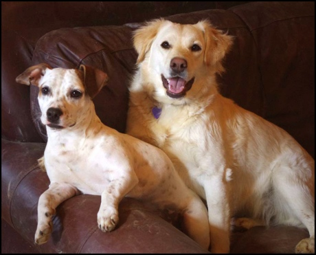 """Recently Adopted, Suzie with her new """"Big Sister"""", Angel"""