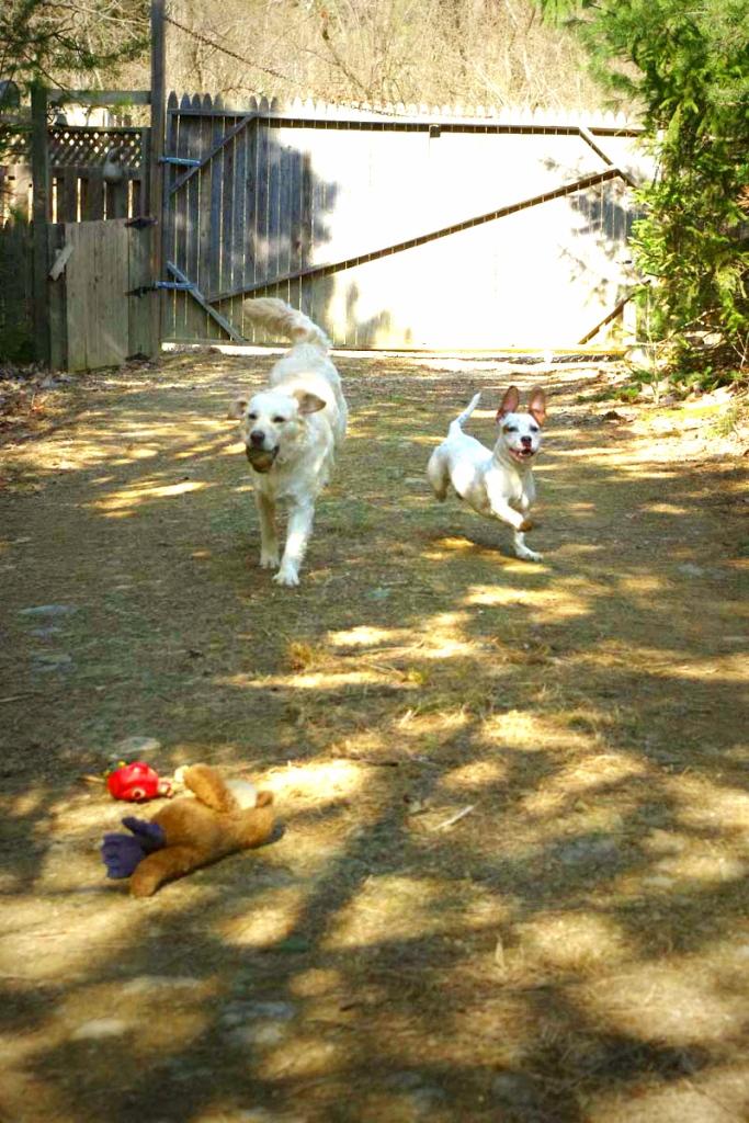 pup play